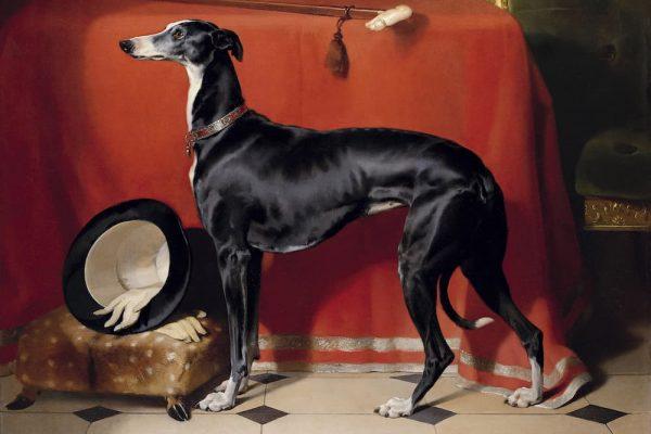 Portrait of Prince Albert's Hound, Eos, 1948