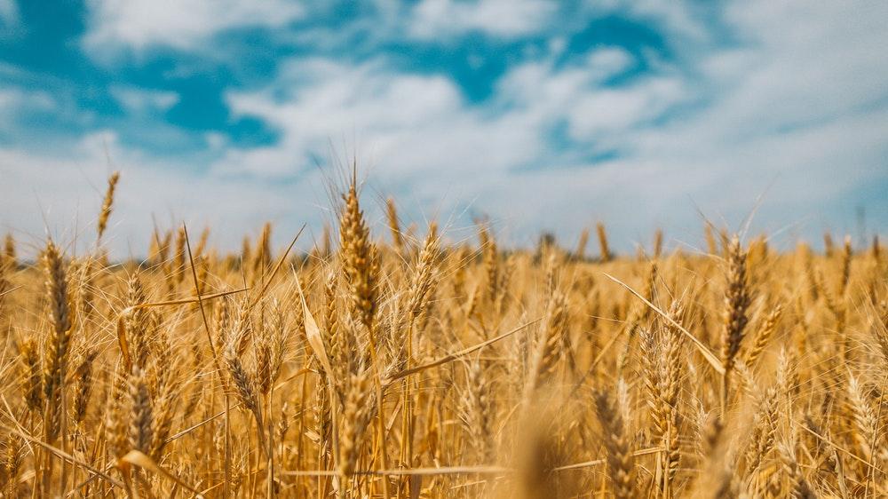 Good Grain